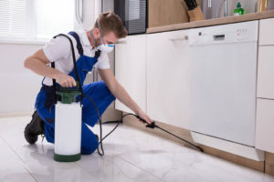 The Costs of Contracting Pest Control Services in Frisco TX