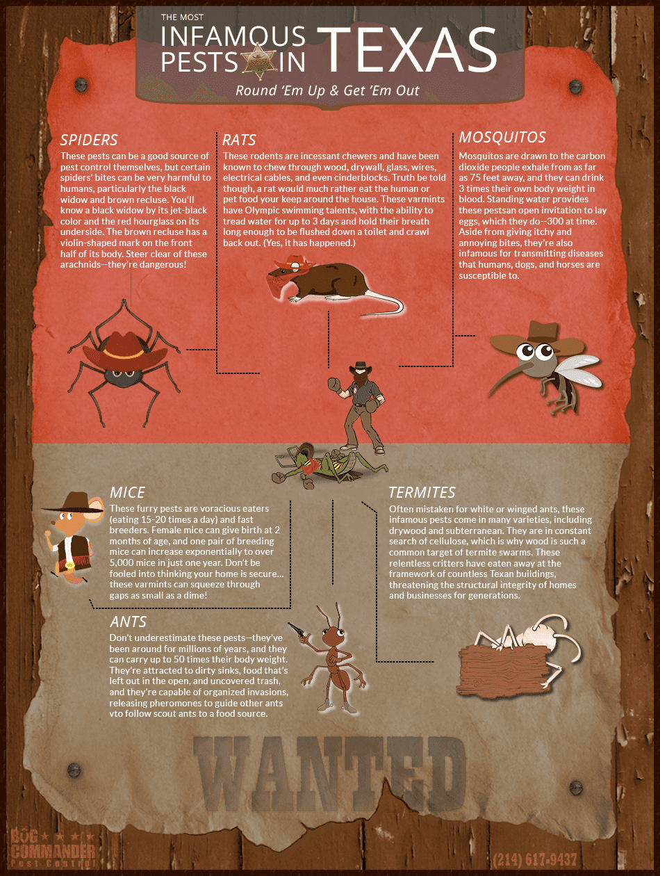 Texas pest infographic